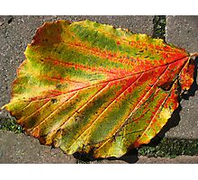 Autumnal Leaf Photographic Print