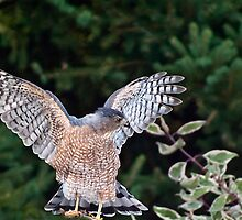 Spreading My Wings by Robin Webster