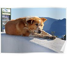 Pondering Dog Laying on the Edge of Town Poster