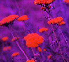 Floral Chromatic Overkill by Deborah Crew-Johnson