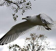 Flight of Fancy by Heather King