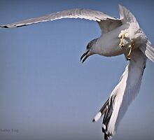 Angle Of Attack by Heather King