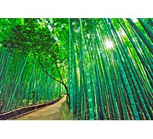 Bamboo forest at Sagano - Arashiyama (Kyoto) Photographic Print