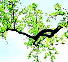 Branch Bunch by Deborah Crew-Johnson