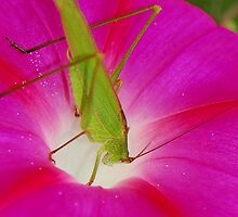 cricket with flower by davvi