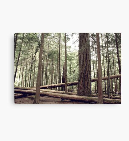 Touch. Wood. Canvas Print