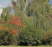 Weeping Willow by WeeZie