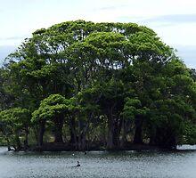 The Island - Centennial Park Duck Pond by Paul Todd