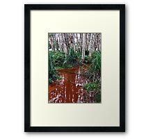 Lachlan Swamp - Centennial Park Framed Print