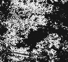 Series: Leaves 6 by Deborah Crew-Johnson