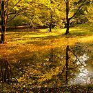 Отражение осени -Fall Reflection by LudaNayvelt