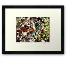 Symbiotic Landscape Framed Print