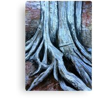 History of a tree Canvas Print