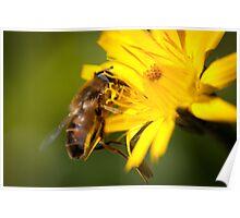 Honey Bee?? Poster