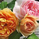 Three Roses by Christine Wilson