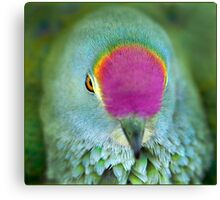Rose Crowned Fruit Dove, Mission Beach FNQ. Canvas Print