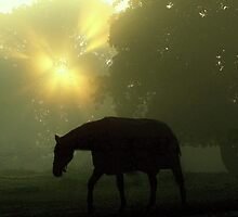 Morning mistery by Alan Mattison