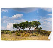 Cork tree grove, Santo Antonio das Areias, Marvão, Portugal Poster