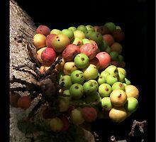 Forbidden Fruit by jono johnson