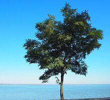 Lonely tree acacia on the shores of the sea by vladromensky