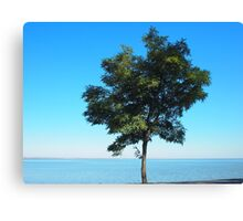 Lonely tree acacia on the shores of the sea Canvas Print