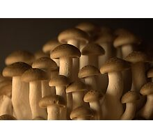 Mushroomscape Photographic Print