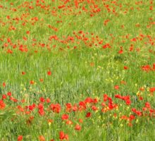 A Field of Poppies Sticker