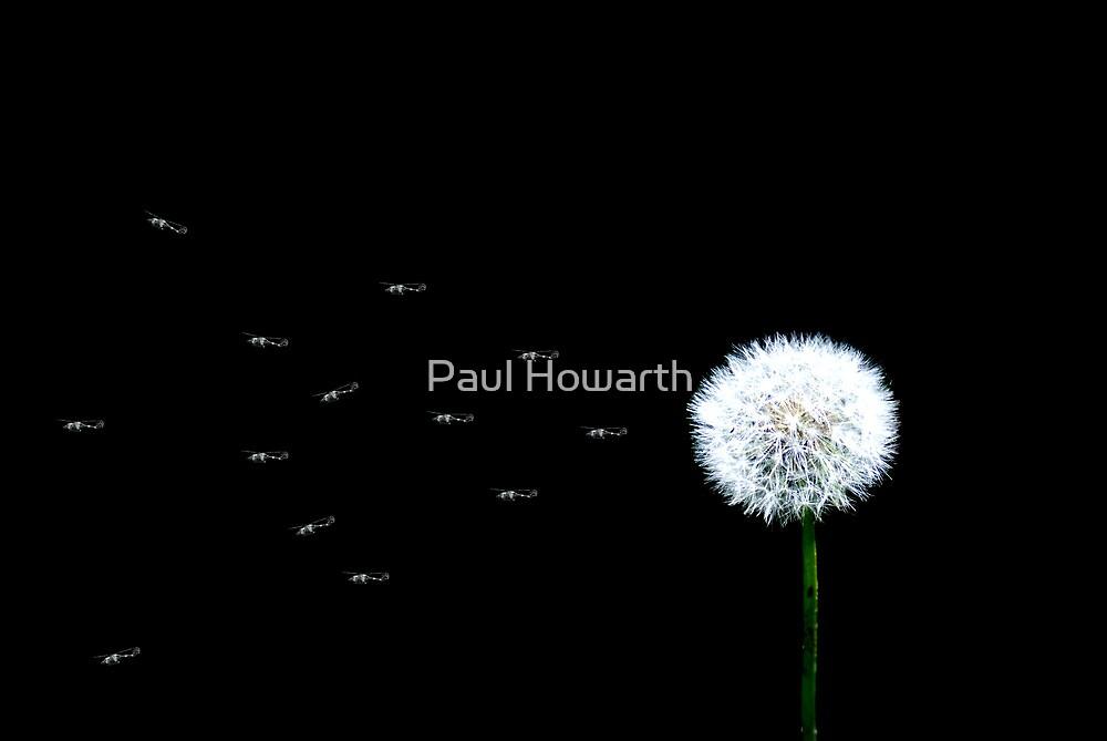 Gentle Persuasion by Paul Howarth