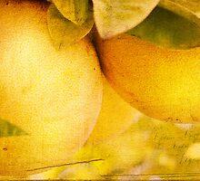 Citrus Tang by Margi