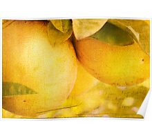 Citrus Tang Poster