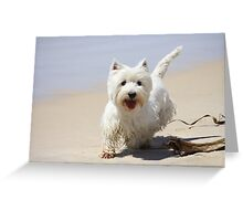 Scotty Greeting Card