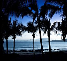 Blue palms by BlaccnWhite