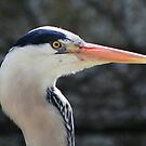 Close Encounter Heron by Hovis