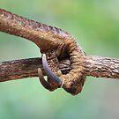 Claw of an Australian Brush-turkey by aussiebushstick