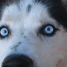 Blue Eyes by Christine  Wilson