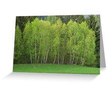 Spring Green - Birch Trees Greeting Card
