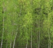 Spring Green - Birch Trees Sticker