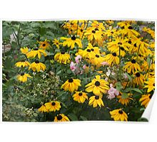 Fall Flowers Poster