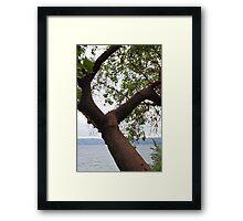 Trees Along Lake Washington Framed Print