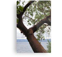 Trees Along Lake Washington Metal Print