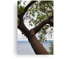 Trees Along Lake Washington Canvas Print