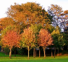 Autumn Tree's by shelleybabe2