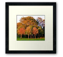 Autumn Tree's Framed Print