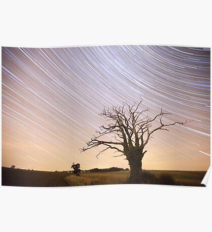 Dead Tree Startrails Poster