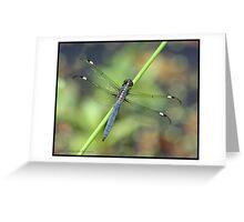 Spangled Skimmer... Greeting Card