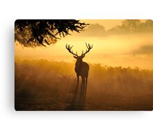 Close Encounters Canvas Print