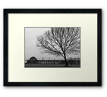 Vineyard with Tree Framed Print