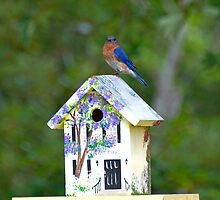 The Bird House by TJ Baccari Photography