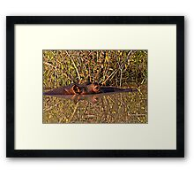 Hippo Reflections Framed Print