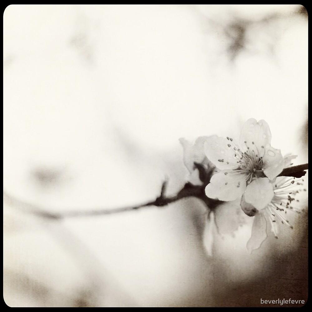 blossom by beverlylefevre
